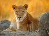 Lioness of Allah&#039;s picture